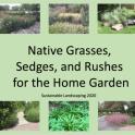 Grasses Sedges Rushes Title Slide