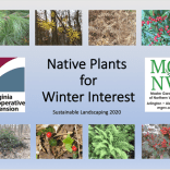 Title Slide Native Plants for Winter Interest