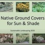 nativegroundcover_thumb
