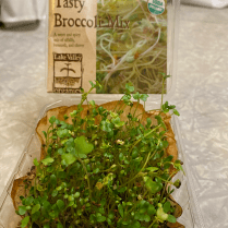 This is a repurposed pint-sized clamshell w holes so coffee filter is in place. Broccoli microgreens are one week old.
