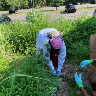 gardeners pulling weeds