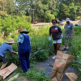 4 people pulling invasive plants