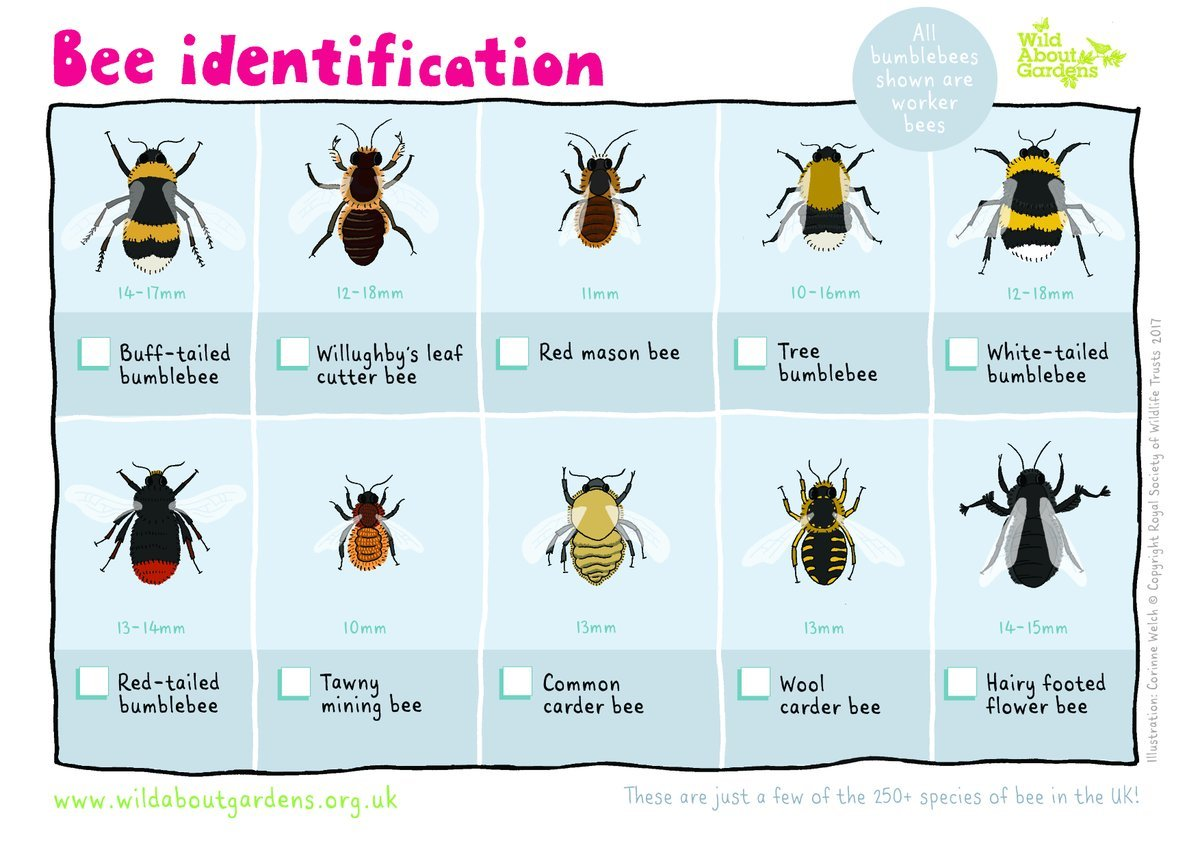Wasps Bees ID Guide. Spring to early Summer we get calls ...