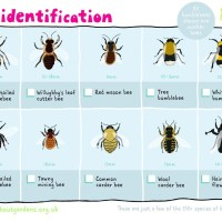 Bees Wasps ID Guide