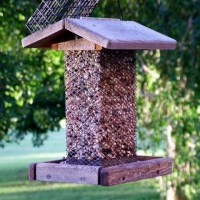Mice and Rats love bird seed