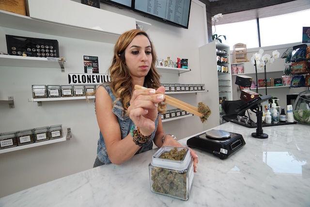 CCSC Cloneville, Studio City, cannabis,