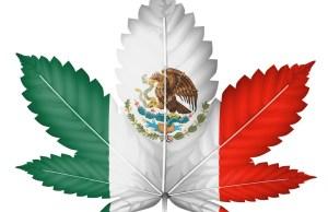 Mexico Legalizing Marijuana Products