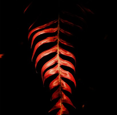 Where the Red Fern Withers