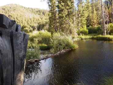 Camping by a beaver pond at Easley Hot Springs.