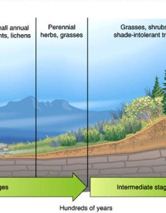 Primary succession also ecological data analysis environmental science rh mhshonorsenvr weebly