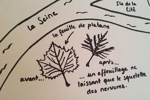 Valise projet définitif, pop-up Paris, feuille platane