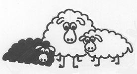 """Projet livre pop-up """"Variation pour un loup et un jardin potager"""", maquette p. 4, février 2016, détail moutons, version retravaillée"""
