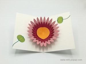 Carte pop-up Marguerite rose, vue de dessus de la carte ouverte et des motifs intérieurs