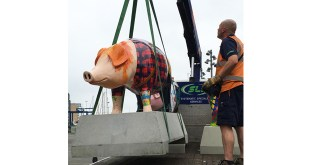Logistics firm SLi proves pigs can fly