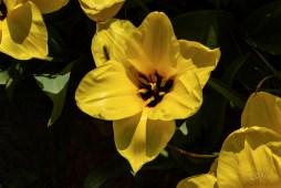 Les fleurs de La Torche