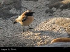 Décembre, le mois des oiseaux rares