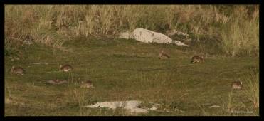 lapins-6916w