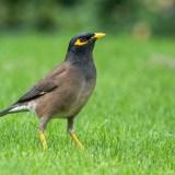 the bird still sings. Coffee With Mi