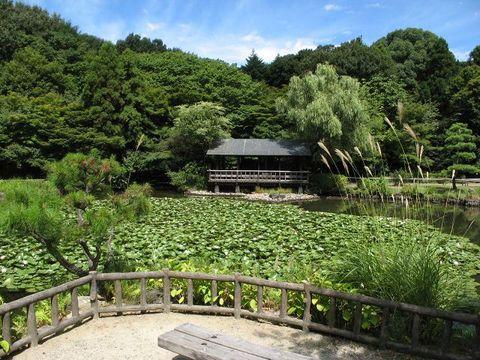 東山植物園の奧池風景: 東山動物園の動物の寫真と動畫(mi84ta's)