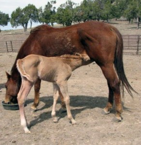 Mom and baby take nourishment after a long journey