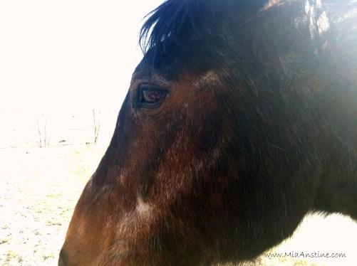 Gironimo, aka G-Man. The toughest horse on the mountain.