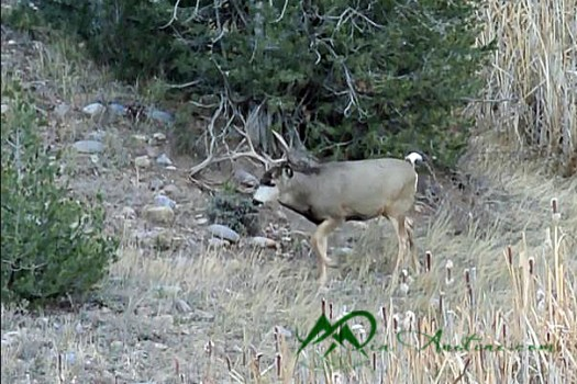 """This 4x3 mulie sauntered away after giving the willows the """"what for""""."""