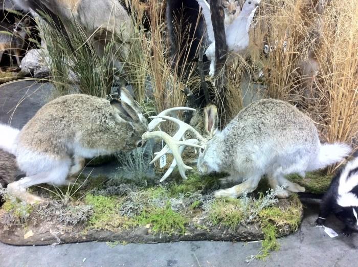 Rutting Bucks - Jackalopes
