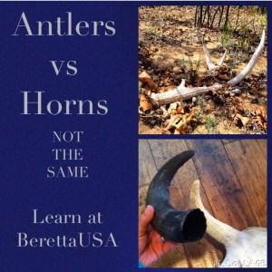 Antlers vs Horns at Beretta Blog