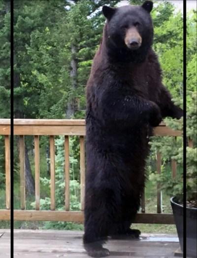 CPW-Bear-Aware-4faa379c-3db8-439f-8818-ce55b38600fb