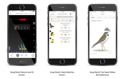 best-ios-apps-bird-identification