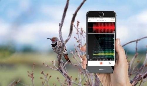 identify-birds-with-song-idnetifying-app