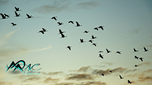 Migratory-Birds-MAC-Outdoors-Mias-Motivations