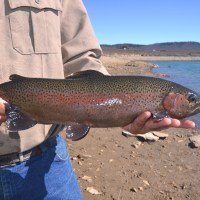 Interested in Catching a 20-Inch Rainbow Trout?