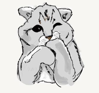 KittyCatTimed
