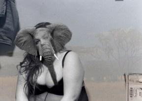elephantface