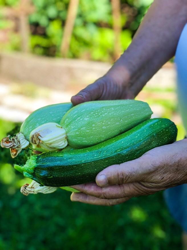 garden zucchini edited-1