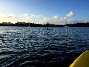 Kayaking Oleta River State Park (Copyright Miamicito)
