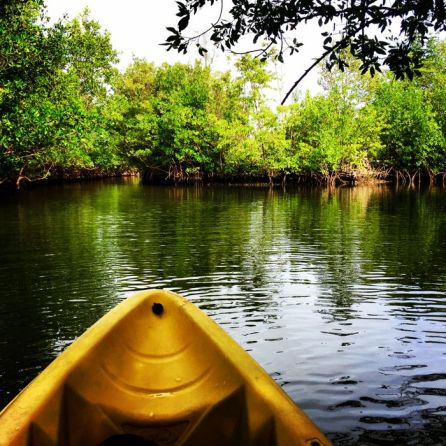 Kayaking Oleta River State Park (Copyright Miamicito)