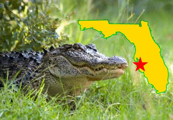 Piqua River Gator Finally Returns To Florida