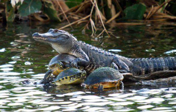 Everglades Fauna