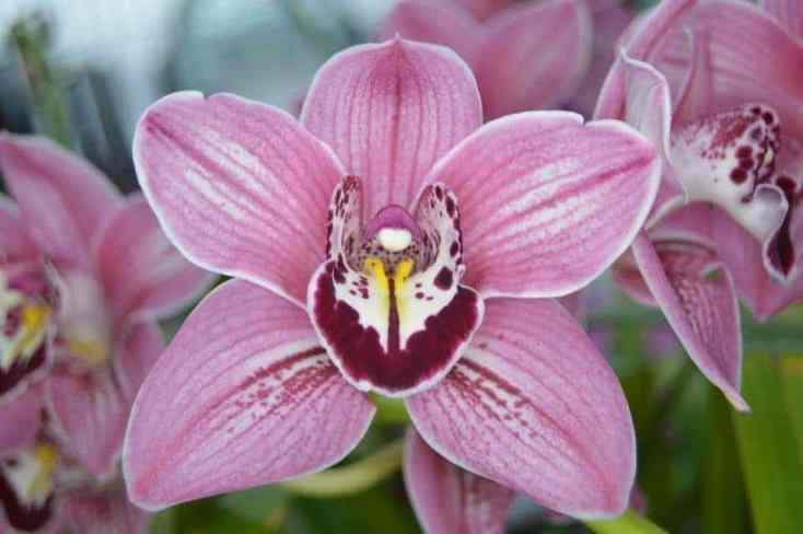 Discount tickets for Tamiami International Orchid Festival