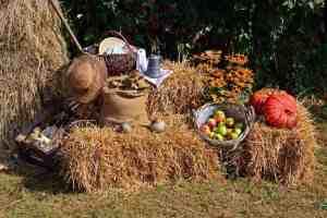 Fall Festivals and Harvest Festivals around Miami