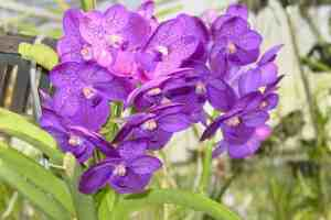 Free admission to Orchids in the Park