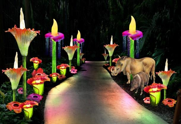 Jungle Island lumina deals