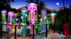 Jungle Island Luminosa deal