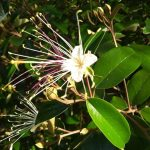 Free gardening webinar on Florida native plants