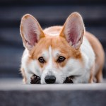 Scared pet on Fourth of July? Here are some tips