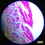 AMSCOPE-KIDS M30-ABS-KT1 Beginner Microscope Kit, LED and Mirror Illumination, 120x – 1200x Six6