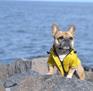 The Ellie Dog Raincoat will keep your dog dry with a double-layer design