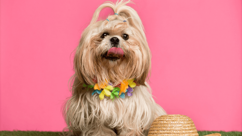 The Grooming Secrets Behind Mias Premium Pet Products MPPP